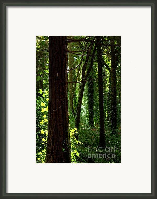 Green Forest Framed Print By Carlos Caetano