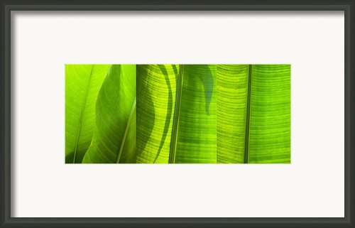 Green Leaf Framed Print By Setsiri Silapasuwanchai