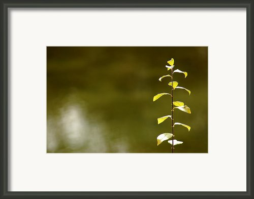 Green Morning Framed Print By Leeann Mclanegoetz Mclanegoetzstudiollccom
