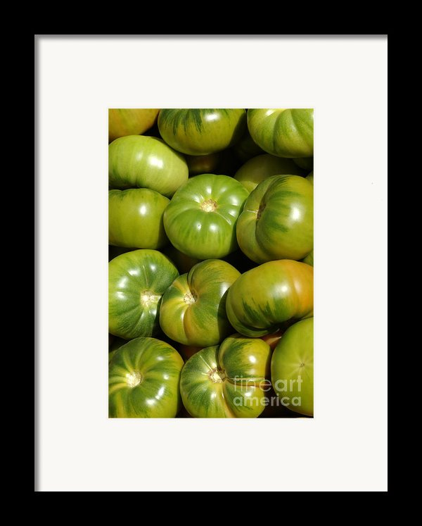 Green Tomatoes Framed Print By Frank Tschakert