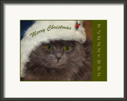 Grey Cat Santa 2 Framed Print By Joann Vitali