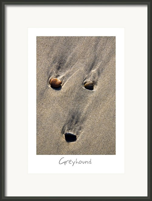 Greyhound Framed Print By Peter Tellone