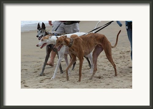 Greyhounds On The Beach Framed Print By Jim Vansant