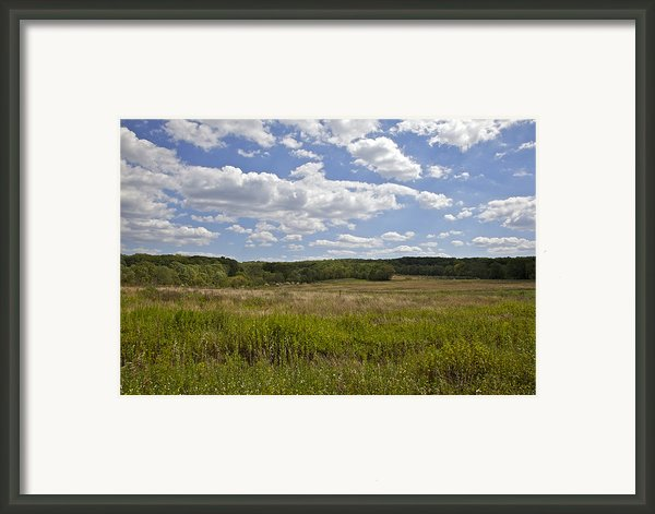 Griggstown Native Grassland Preserve Framed Print By David Letts