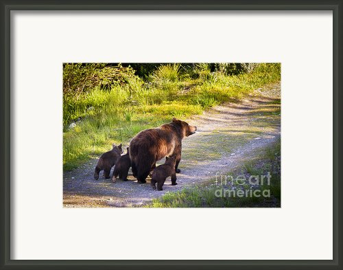 Grizzly Bear 399 And Cubs Framed Print By Mike Cavaroc