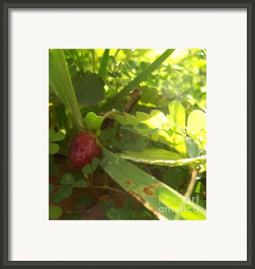 Growing Framed Print By Diana Lovett