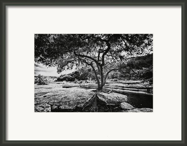 Grown Into The Rock Framed Print By Lisa  Spencer