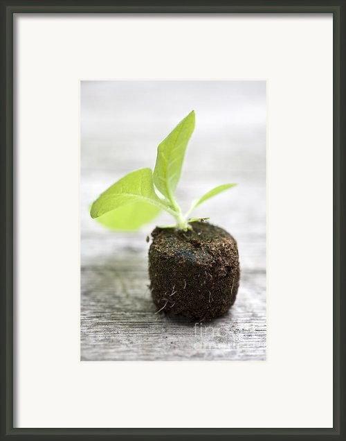 Growth Framed Print By Frank Tschakert