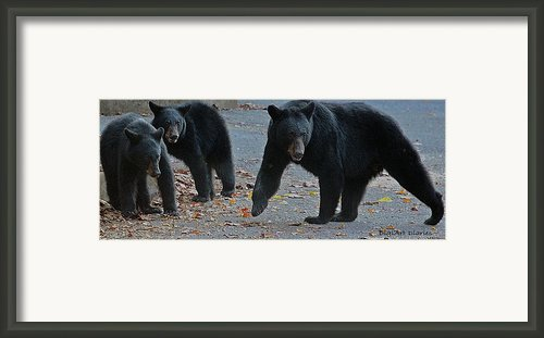 Guarding Her Cubs Framed Print By Digiart Diaries By Vicky Browning
