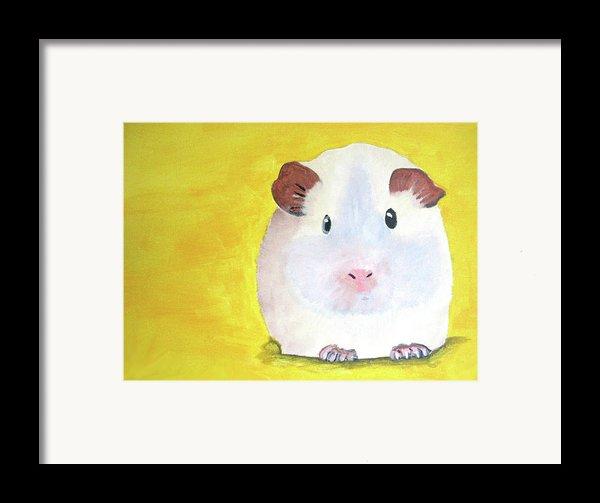 Guinee Pig Framed Print By Darren Stein