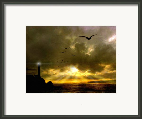 Gull Flight Framed Print By Robert Foster