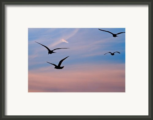 Gulls At Dusk Framed Print By Karol  Livote