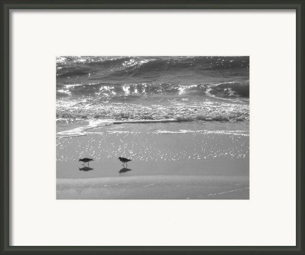 Gulls Taking A Walk Framed Print By Cindy Lee Longhini