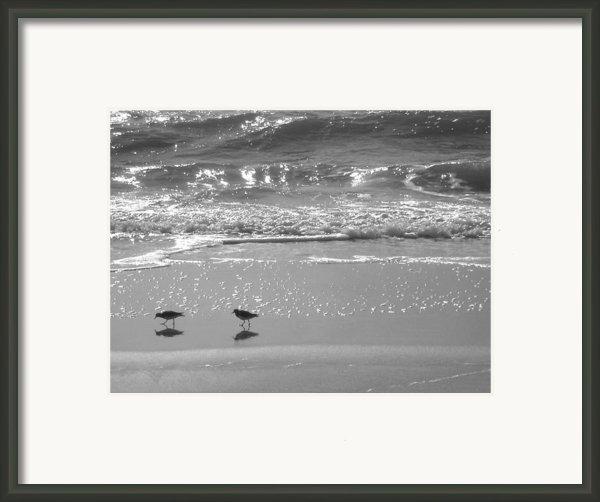 Gulls Taking A Walk Framed Print By Cindy Lee Longhini
