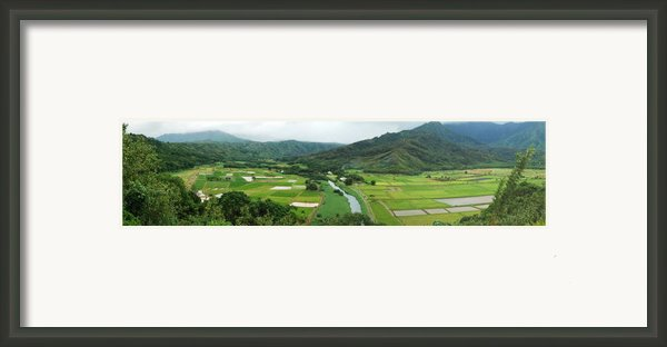 Hanalei Taro Fields Framed Print By Michael Peychich