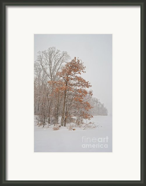 Hanging On Framed Print By Pamela Baker