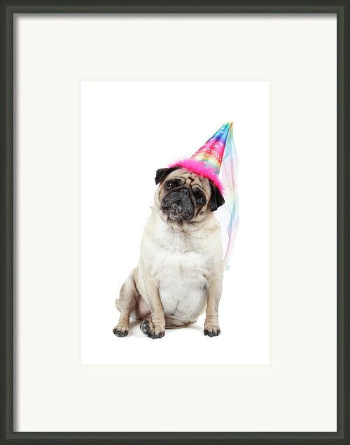 Happy Birthday Framed Print By Mlorenzphotography