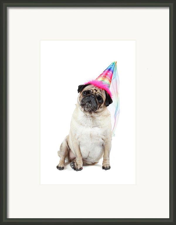 Happy Birthday Framed Print By Mlorenzphotography