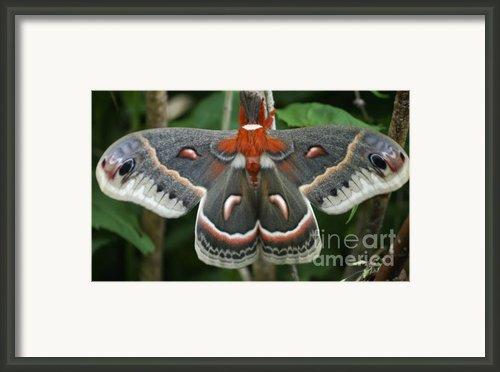Happy Birthday Framed Print By Randy Bodkins