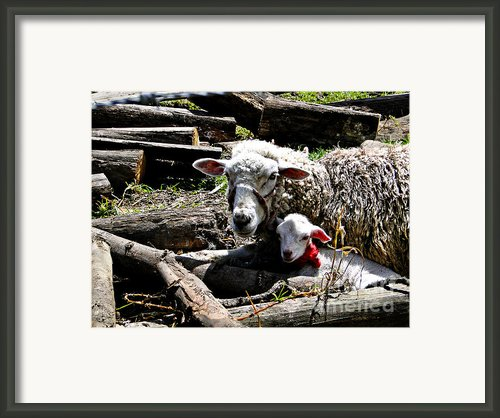 Happy Mothers Day Framed Print By Al Bourassa