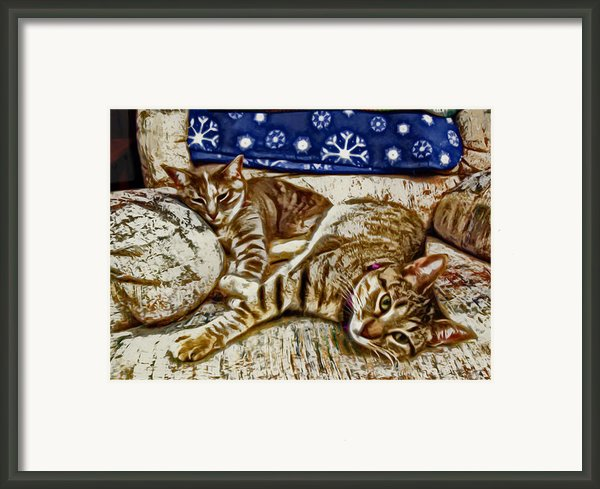 Happy Together Framed Print By David G Paul