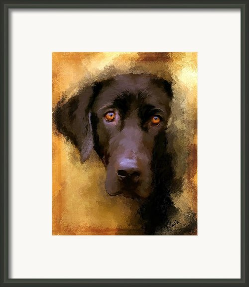 Harvest Lab Framed Print By Robert Smith