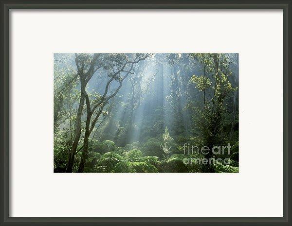 Hawaiian Rainforest Framed Print By Gregory Dimijian Md