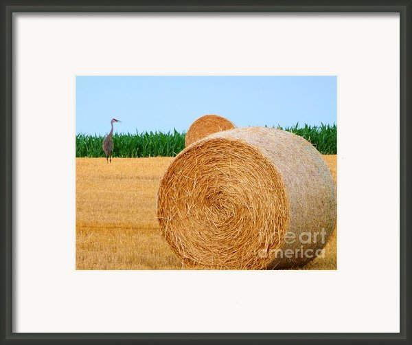 Hay Bale With Crane Framed Print By Michael Garyet