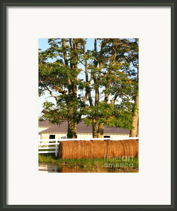 Hay Bales And Trees Framed Print By Todd A Blanchard