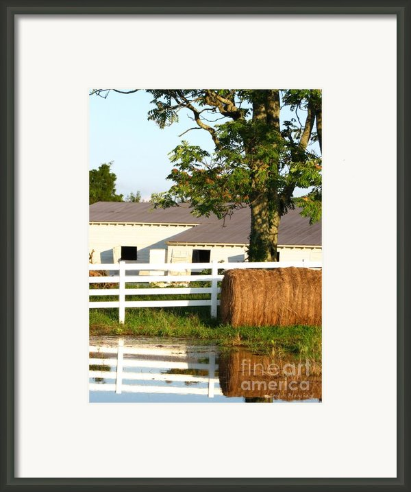 Hay Bales Near The Pond Framed Print By Todd A Blanchard