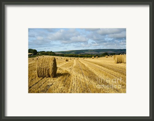 Hay Field Framed Print By Donald Davis