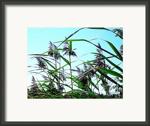Hay In The Summer Framed Print By Pauli Hyvonen