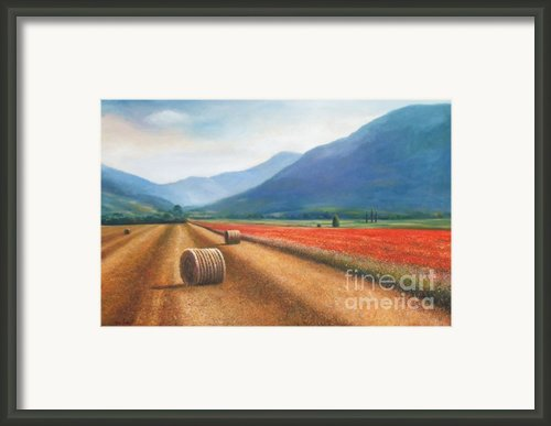 Haybales In Italy Framed Print By Ann  Cockerill