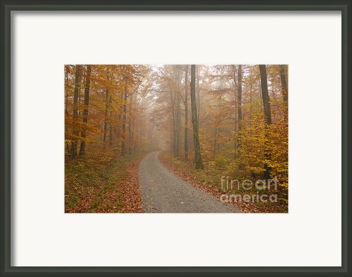 Hazy Forest In Autumn Framed Print By Matthias Hauser