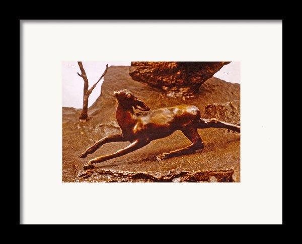 He Who Saved The Deer - Deer Detail Framed Print By Dawn Senior-trask