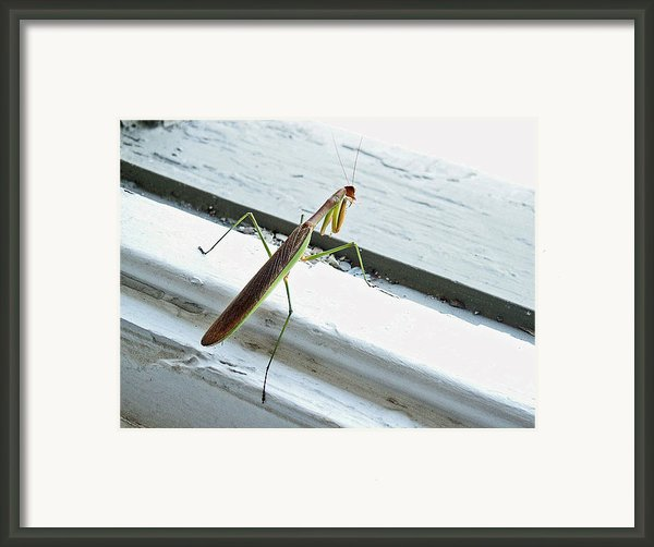 Heading Out Framed Print By Lisa  Phillips