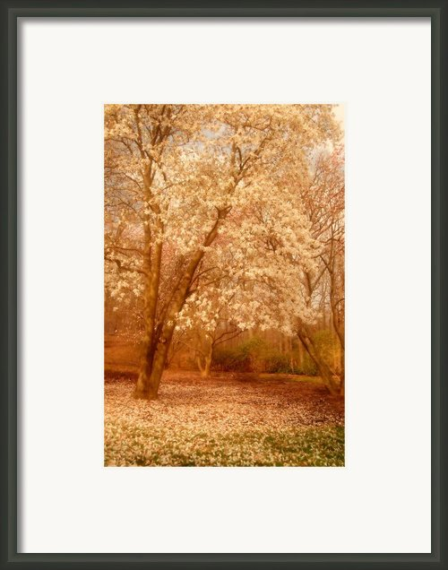 Hear The Silence - Holmdel Park Framed Print By Angie Mckenzie
