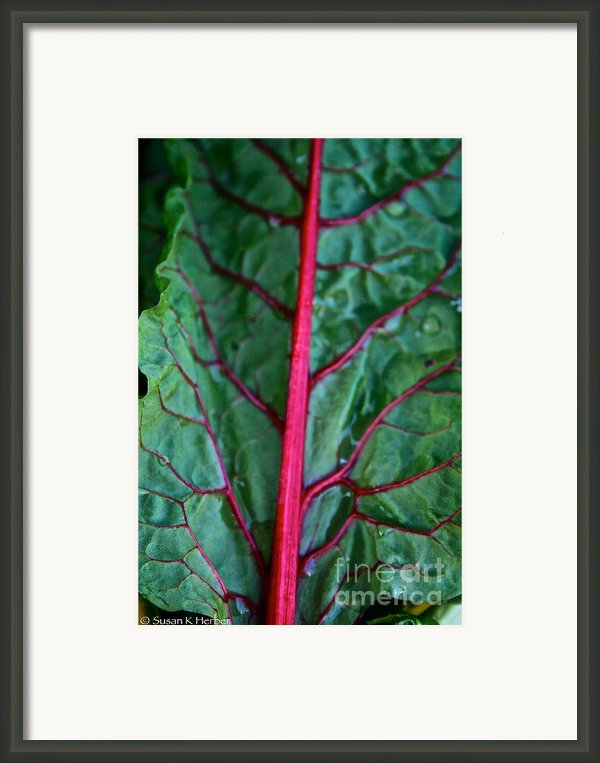 Heart Wise Framed Print By Susan Herber