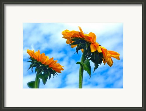 Heaven Above ... Framed Print By Gwyn Newcombe