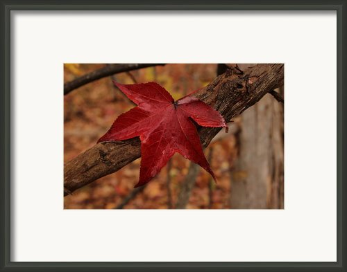 Hello Red Framed Print By Bob Whitt