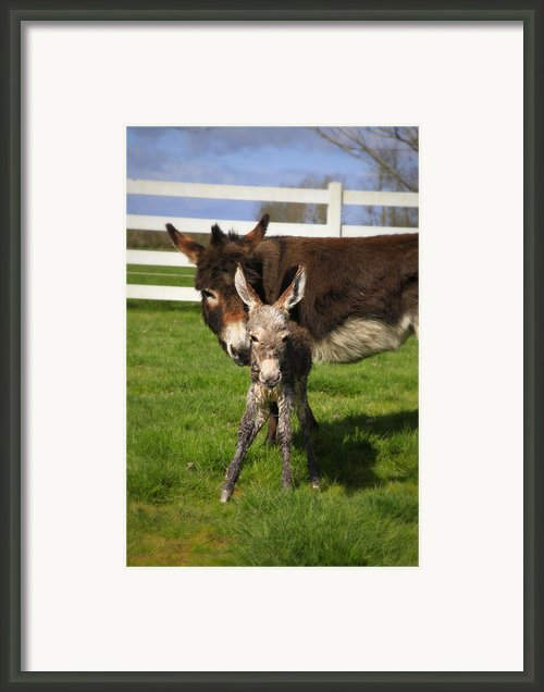 Hello World Framed Print By Tiana Mcvay