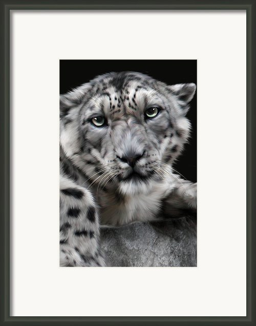 Hercules Framed Print By Big Cat Rescue