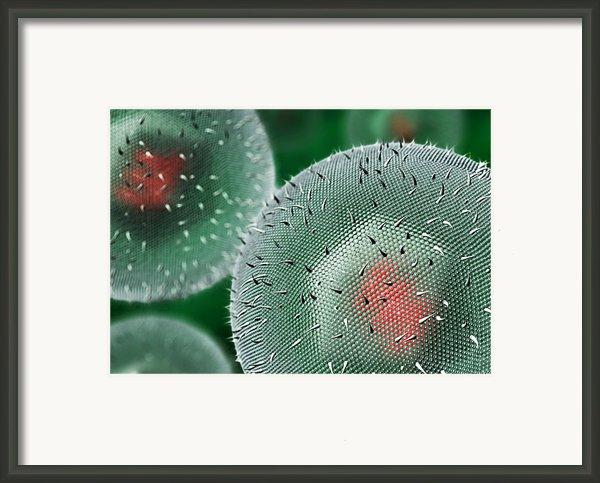 Herpes Virus Framed Print By David Mack