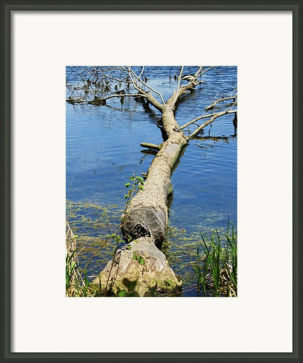 Herrick Lake Framed Print By Todd Sherlock