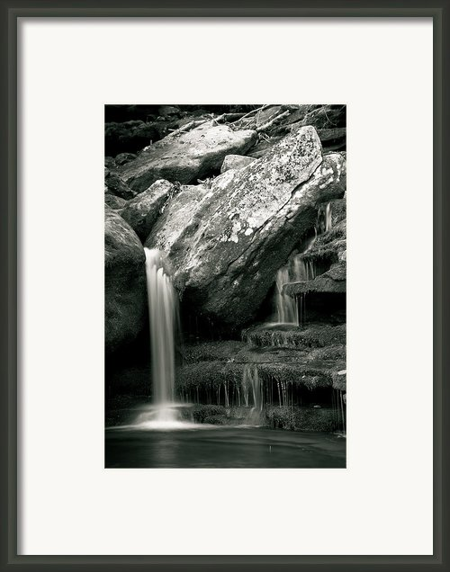 Hidden In The Forest Framed Print By Iris Greenwell