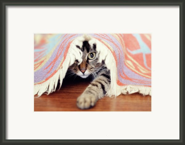 Hiding Tabby Cat Framed Print By Hulya Ozkok