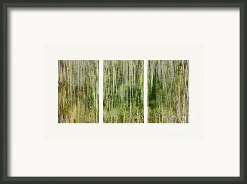 Hillside Forest Framed Print By Priska Wettstein