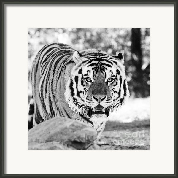 His Majesty Framed Print By Scott Pellegrin
