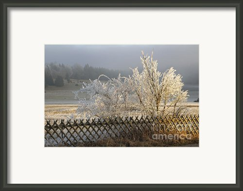 Hoarfrost In Winter Framed Print By Matthias Hauser