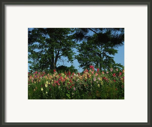 Hollyhocks And Trees Framed Print By Michael L Kimble